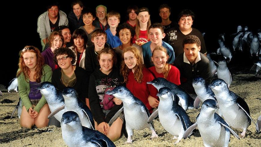 Meet-the-famous-penguins-min